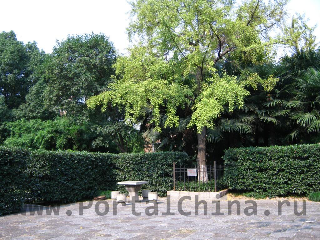 Парк на территории Восточно-Китайского Педагогического Университета