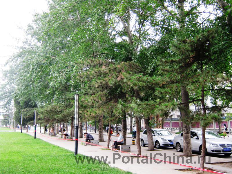 Народный Университет Китая (12)