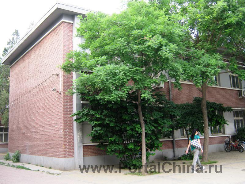 Народный Университет Китая (25)
