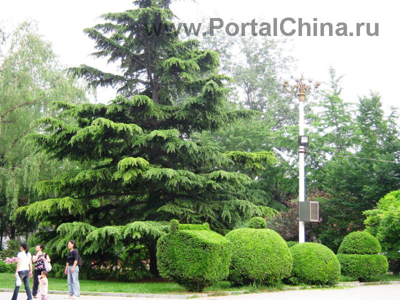 Народный Университет Китая (5)