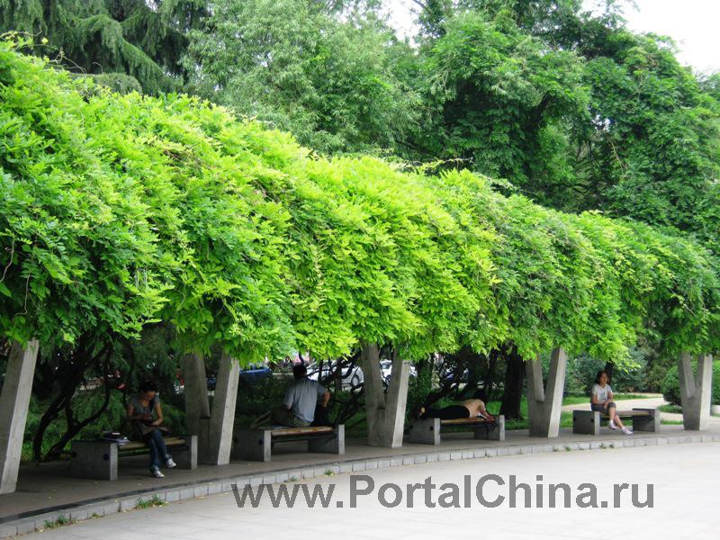 Народный Университет Китая (6)