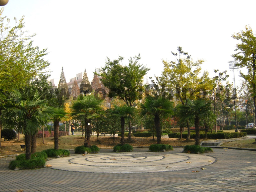 В Университете Дунхуа есть много красивых парковых зон