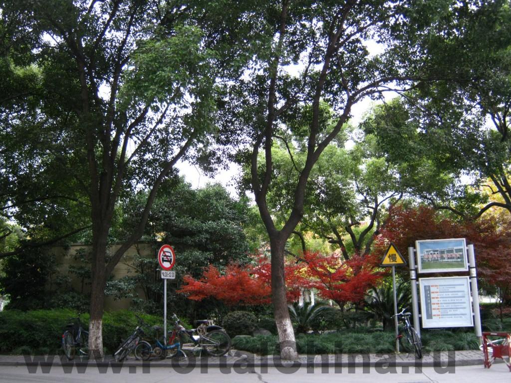 Donghua University (7)