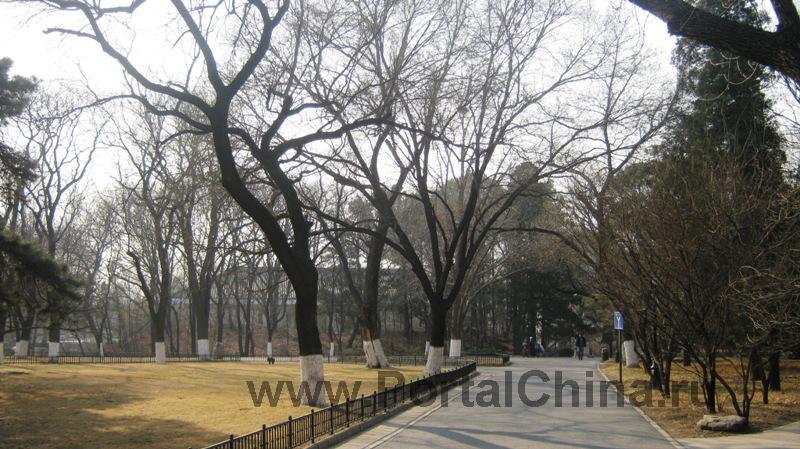 Пекинский Университет (30)