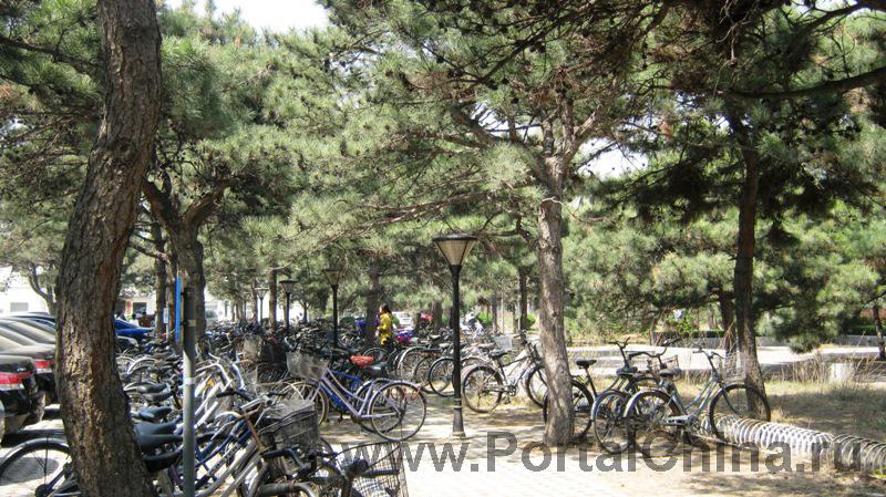 Университет Цинхуа (18)
