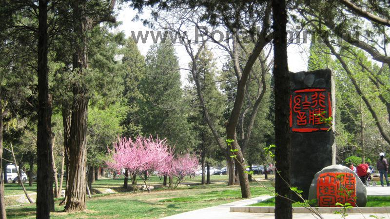 Университет Цинхуа (31)