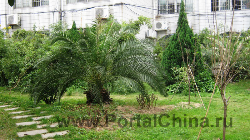 Guangdong-Vocational-School (12)