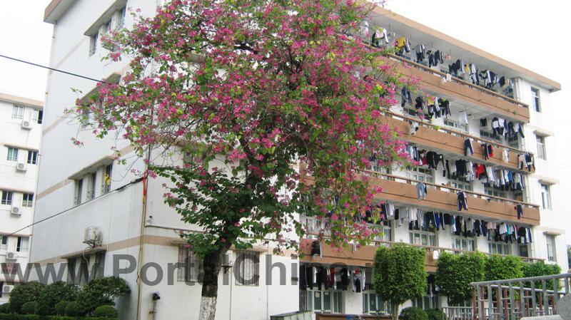 Guangdong-Vocational-School (20)