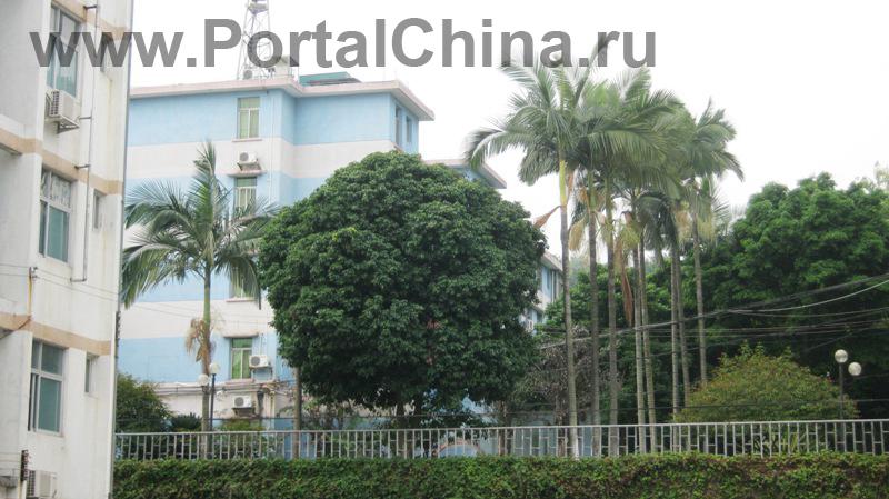 Guangdong-Vocational-School (28)