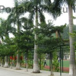 Guangdong-Vocational-School (37)