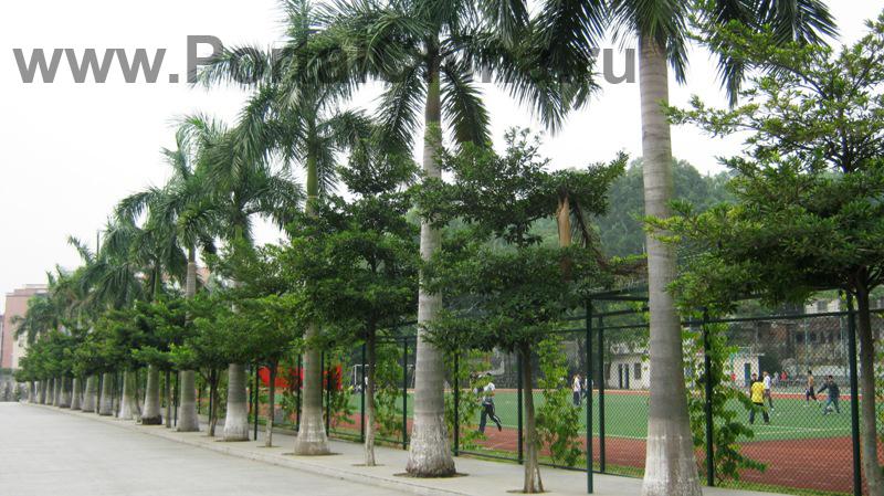 Guangdong-Vocational-School (37)