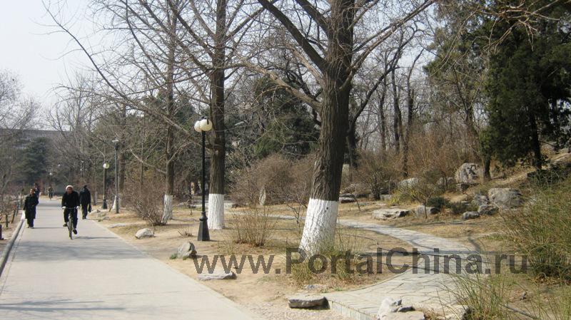 Peking University (12)