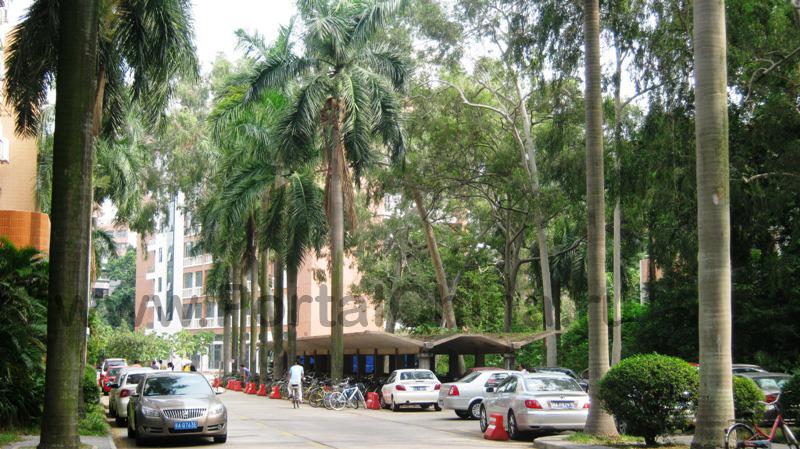 Sun Yat-sen University (21)
