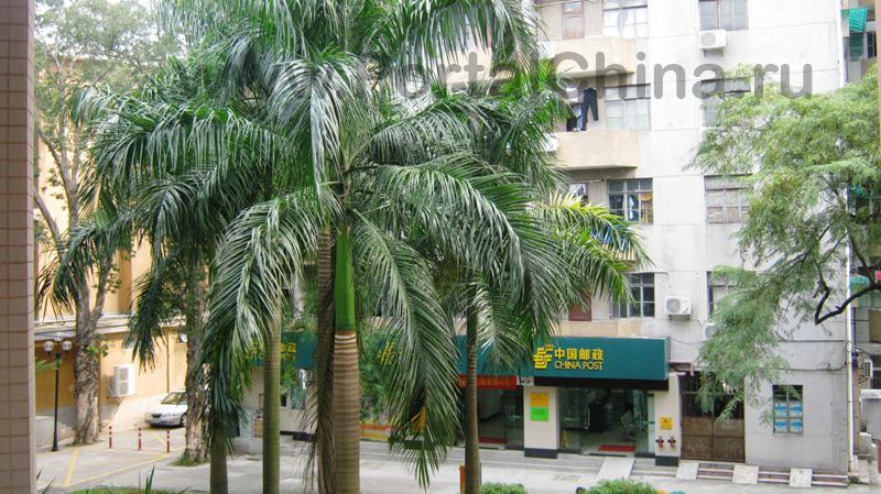 Sun Yat-sen University (37)