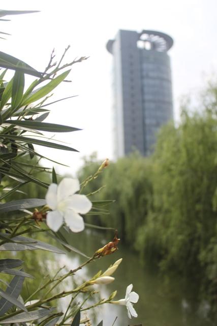 Zhejiang-University