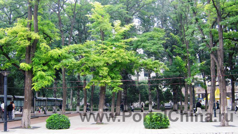 Beijing Jiaotong (5)