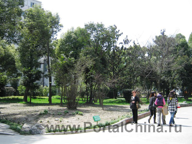 Shanghai-Conservatory-of-Music (5)