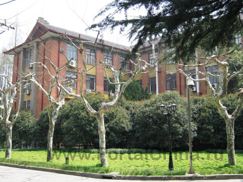 Shanghai Normal University (17)