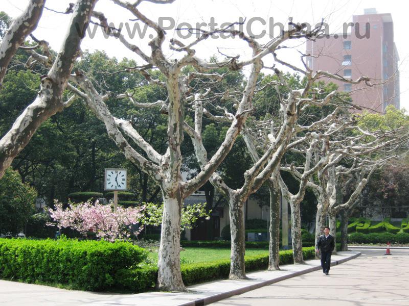 Shanghai Normal University (23)