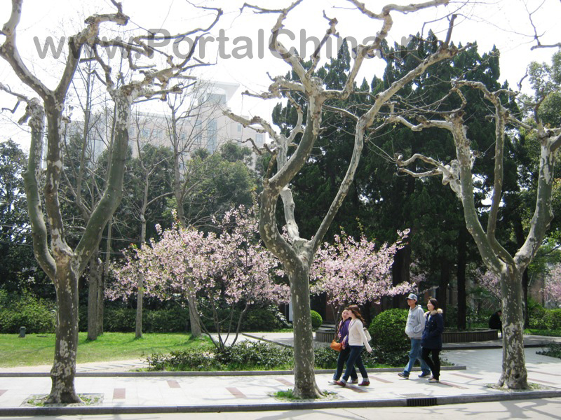 Shanghai Normal University (6)