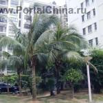 Хайнаньская Школа Китайского Языка в Хайкоу